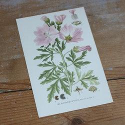 Florabild - Rosenkattost