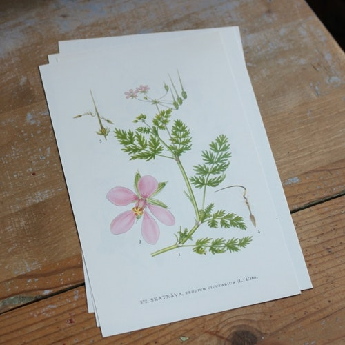 Florabild - Skatnäva