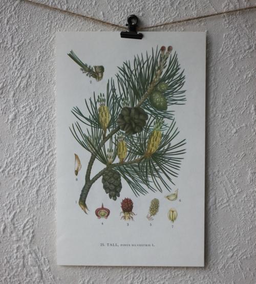 Florabild - Tall