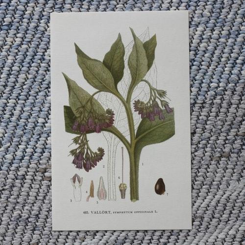 Florabild - Vallört