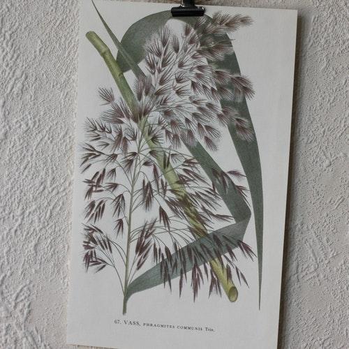 Florabild - Vass