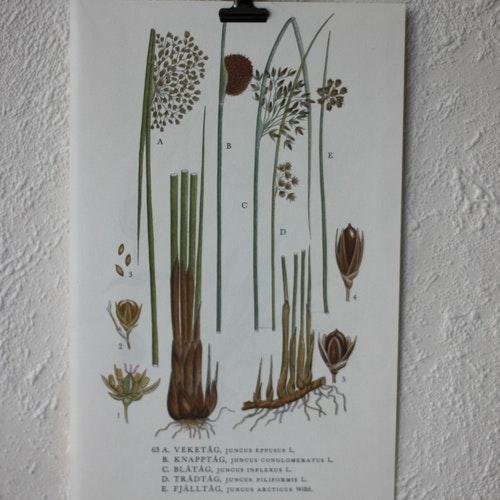 Florabild - Veketåg
