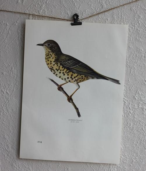 Fågelbild - Dubbeltrast