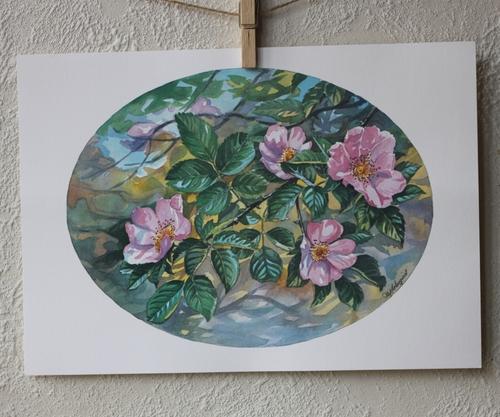 Flora Plansch - Nyponros