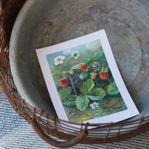Flora Plansch - Smultron