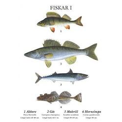 Skolplansch - Fiskar