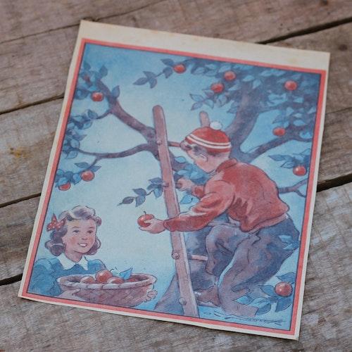 Barnkammarbild - 27 Äppelplockning