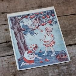 Barnkammarbild - 17 Barn plockar äpplen