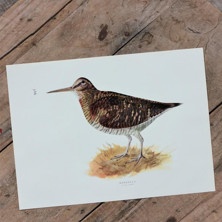 Fågelbild - Morkulla