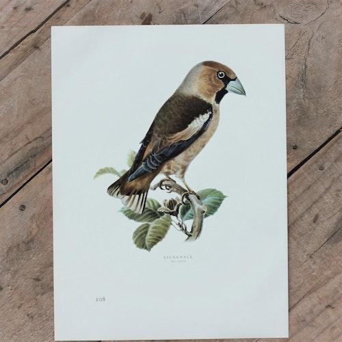Fågelbild - Stenknäck