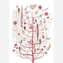 Poster Pink Flora