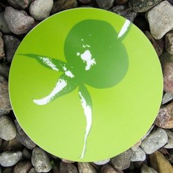 Glasunderlägg nypon grön