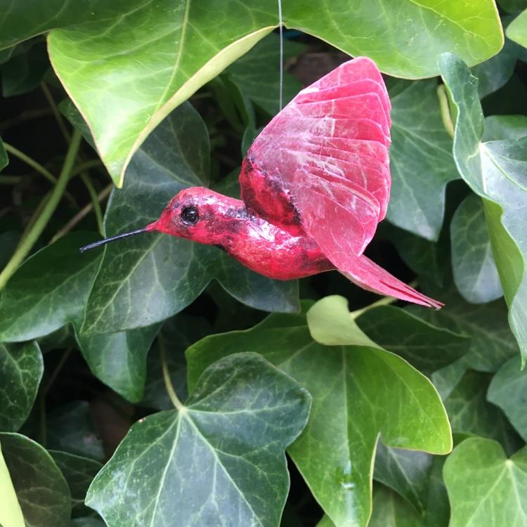 Kolibri röd