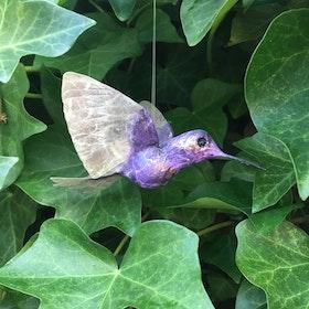 Kolibri lila
