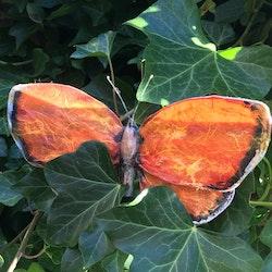 Fjäril Orange