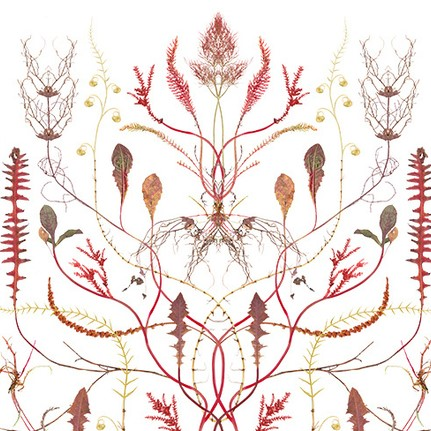 Poster Red Root Tree