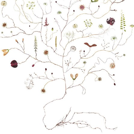 Poster Augustiträd