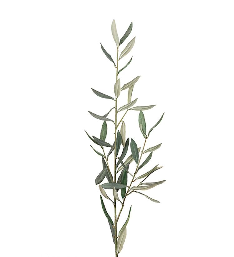 Konstväxt, olivkvist