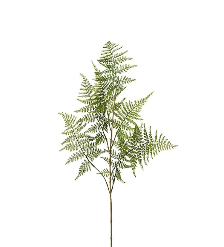 Konstväxt, asparagus