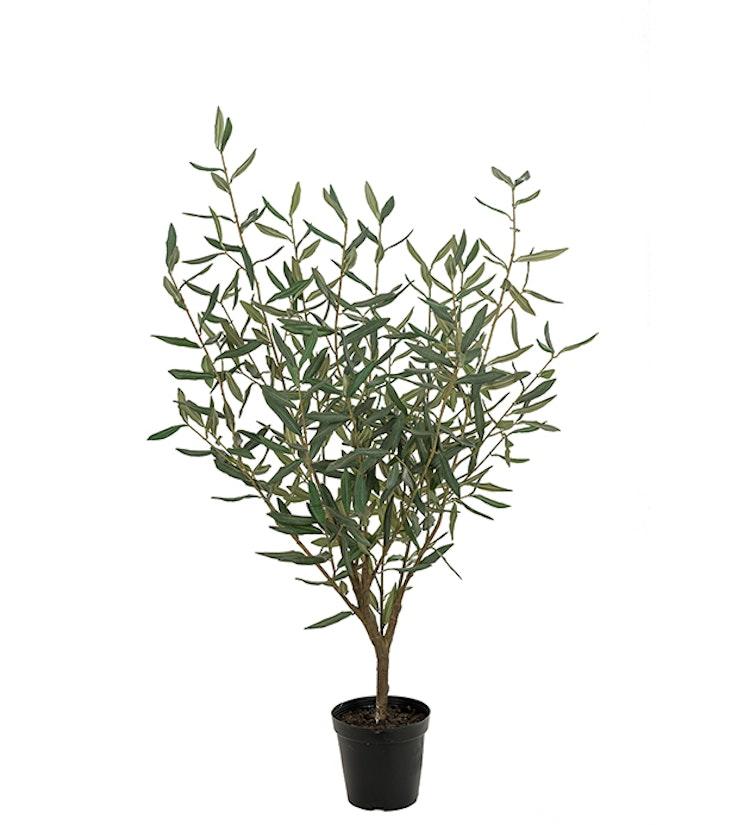 Konstväxt, olivträd i kruka