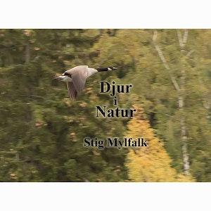 Fotobok Djur i Natur