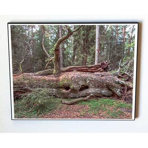 Stockväsen Tavla 28x35cm