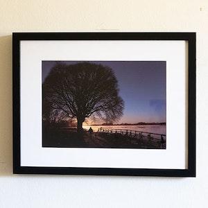 Soluppgång bakom träd