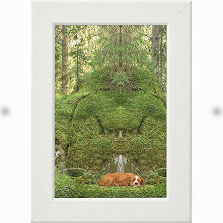 Bergväsen vaktar sovande hund vit ram