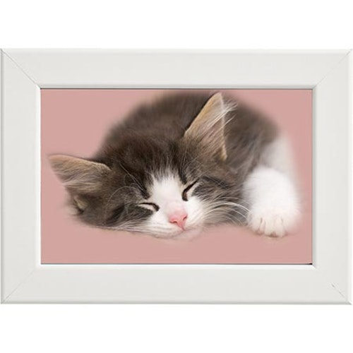 Tavla Sovande katt vit ram