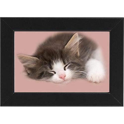 Tavla Sovande katt svart ram