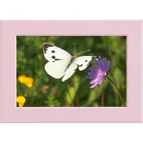 Tavla Fjäril och Blomma rosa ram