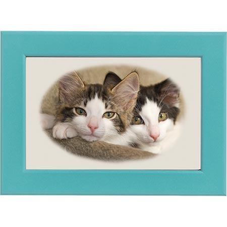 Kattbröder blå ram