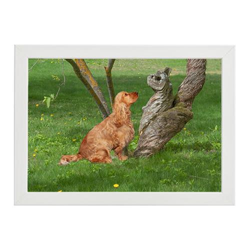 Hund talar med trädstamsväsen vit ram