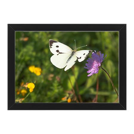 Fjäril och Blomma svart ram