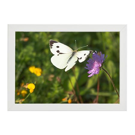 Fjäril och Blomma vit ram