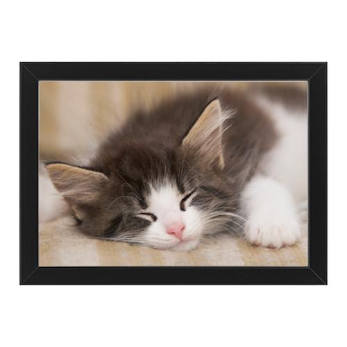 Sovande katt svart ram