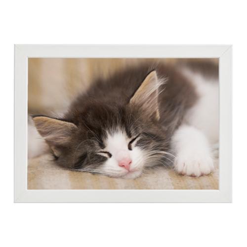 Sovande katt vit ram
