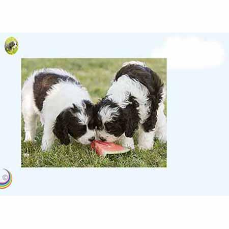 Blandalvas Hundpärm