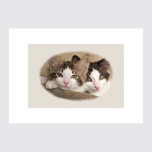 Kattbröder