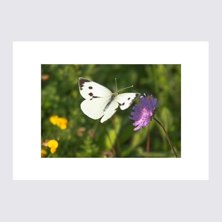 Fjäril och Blomma