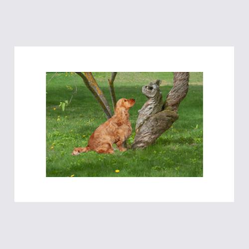 Hund möter trädväsen