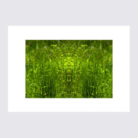 Gräsväsen