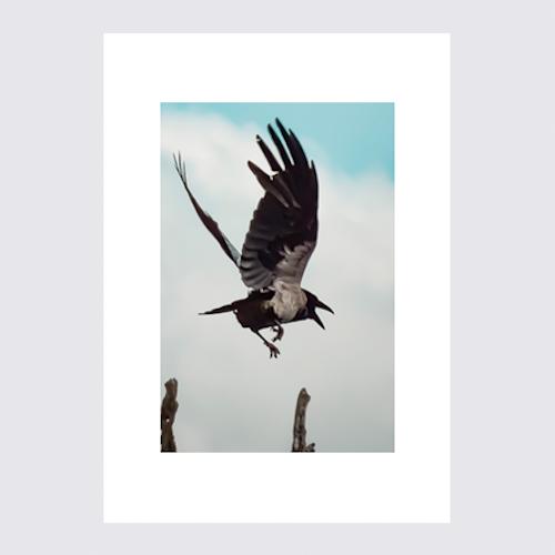 Landning Fågel