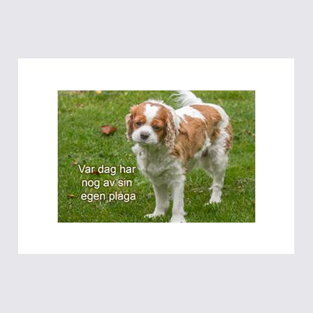 Ordspråksbilder