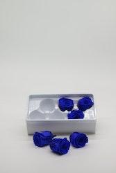 Evighetsros - Mörkblå  XL - 6 st.
