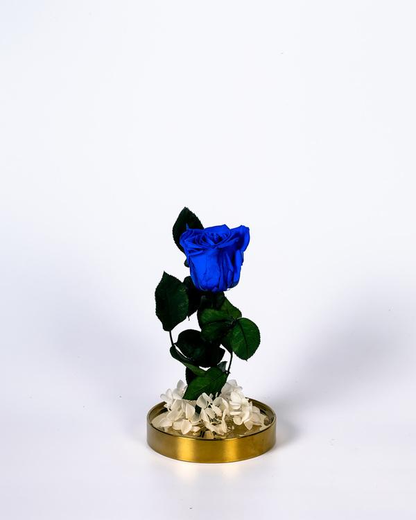 Roskupa - Mörkblå