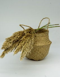 Konserverade Pampasgräs 3 st. - Naturell brun