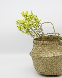 Limonium - Naturell gul