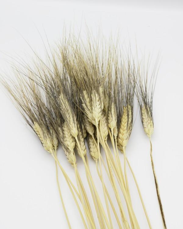 Vete svart skägg - Naturell - A kvalité