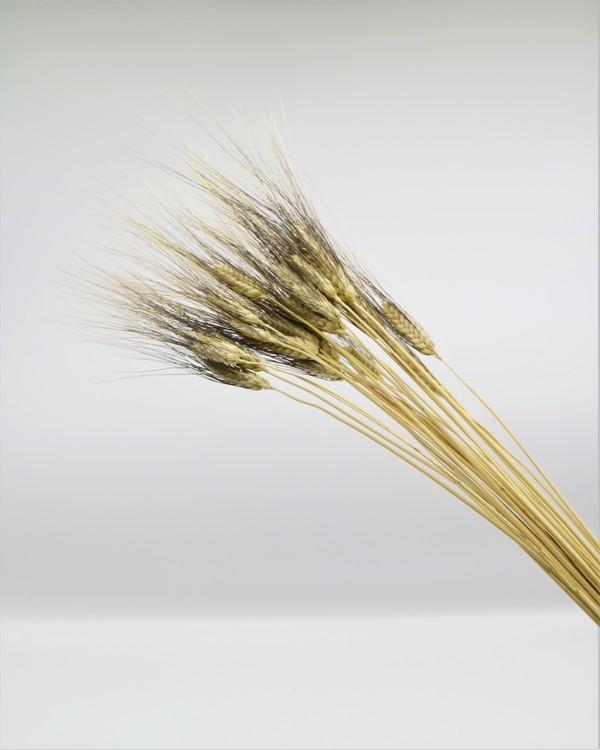 Torkade Vete svart skägg - Naturell - A kvalité